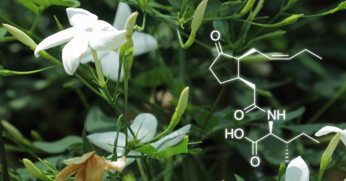 4 utilisations surprenantes de l'acide acétylsalicylique Il y a quelques